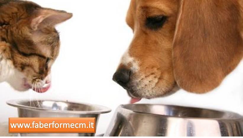La gestione nutrizionale del cane e del gatto
