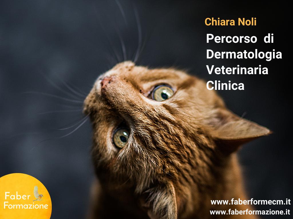 Percorso di dermatologia veterinaria clinica 6