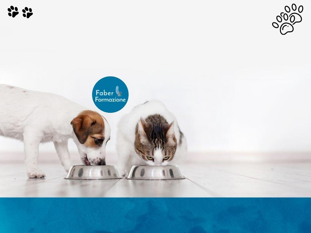 Cors di Nutrizione e Dietetica del Cane e del Gatto