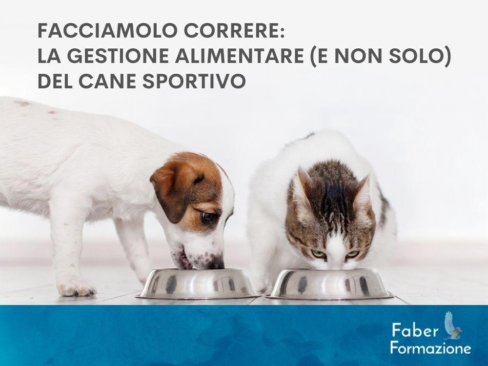 FACCIAMOLO CORRERE: LA GESTIONE ALIMENTARE (E NON SOLO) DEL CANE SPORTIVO